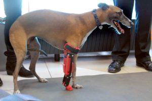 سگ معلول پای مصنوعی تولید شده توسط پرینتر سه بعدی